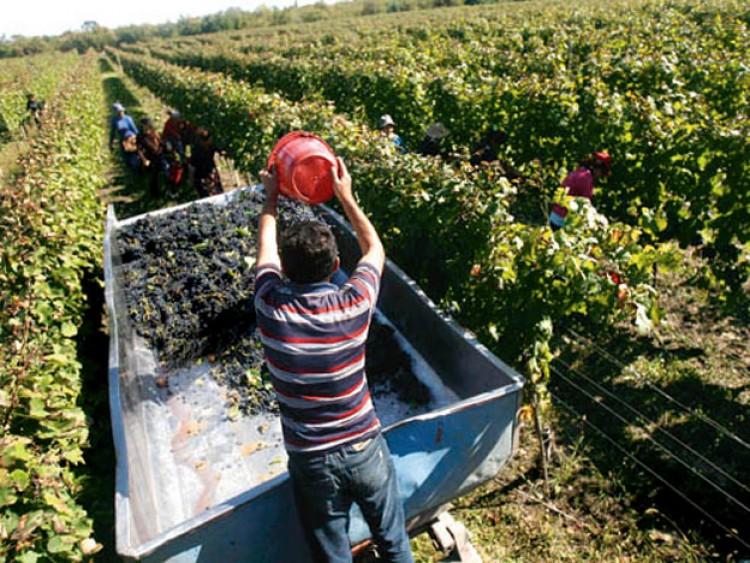 El ITU trabajará en un nuevo proyecto de investigación para la industria vitivinícola